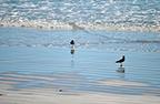 scopri-spiaggia-lidi-ferraresi